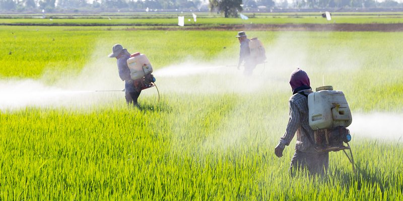 The Dangerous Consequences of Pesticide Exposure