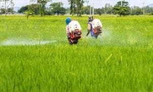 The Dirty Dozen Pesticide-Laced Foods in 2021