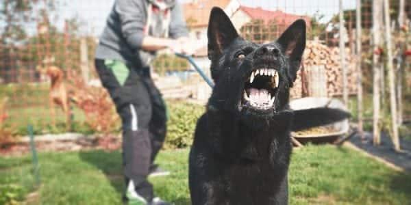 New York Dog Bite Laws