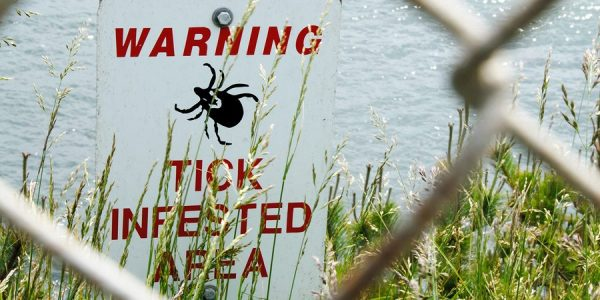 Lyme Disease is a Real Threat in New York